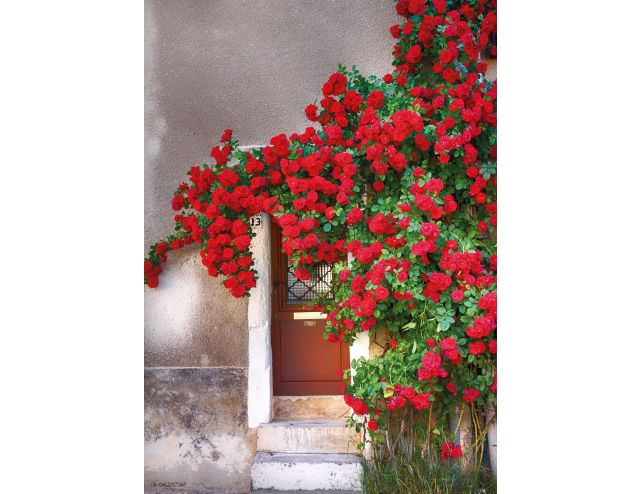 Tuinschilderij Door with red flowers