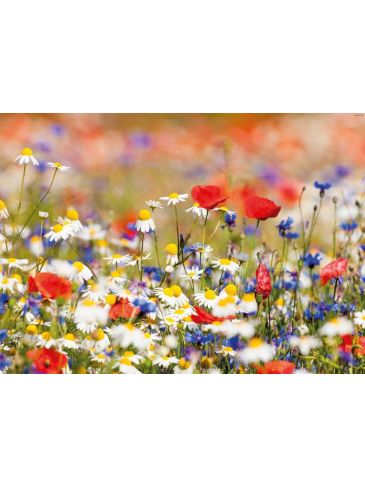 Tuindoek Wild Flower Mixed 150x210cm